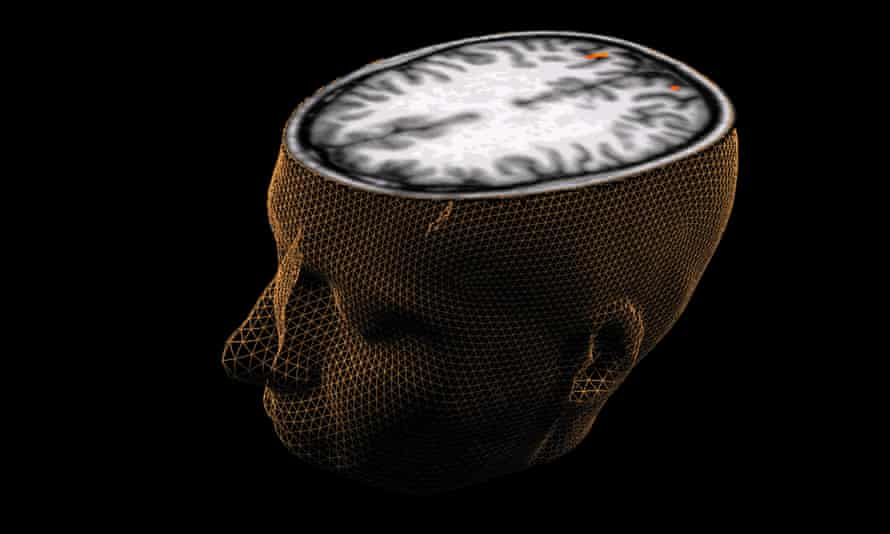 Mind out … about half of our entire brain is devoted to perception, rather than higher 'abstract' though.