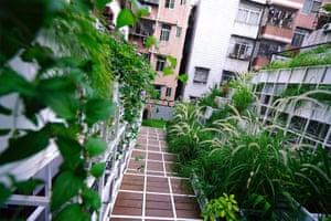 View of urban mountains garden projec
