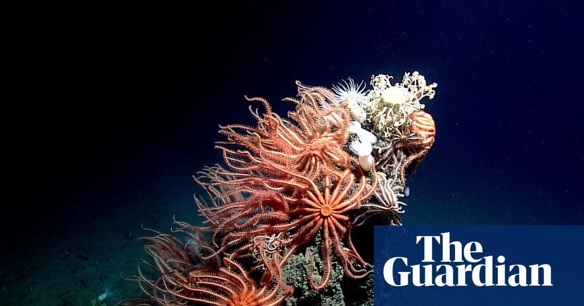 Scientists fear impact of deep-sea mining on search for new medicines