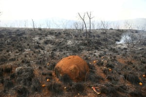 An anthill is pictured in the ashes of a fire that consumed vegetation, after a hot air balloon crashed into the Juquery State Park near Sao Paulo, Brazil