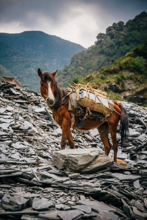 A horse in Khanayara, Himachel Pradesh in Northern India.