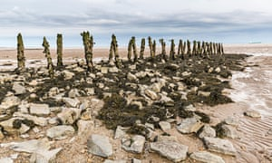 Rotting wood from old pilings at Goldcliff, Wales.