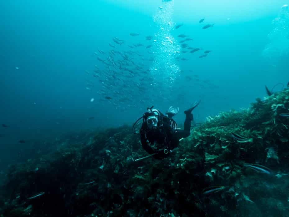 Safety diver and Greenpeace crew member Erik Mekenkamp with an entourage of fish