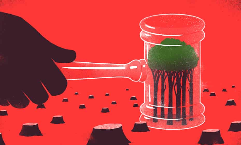 Illustration, of  judge's gavel defeding lone tree from deforestation, by Sébastien Thibault