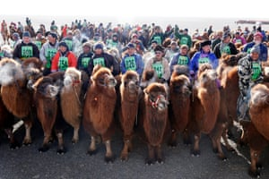 Riders line up for the start of the world's biggest camel race on the steppes of the Gobi desert in Mongolia