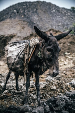 A donkey with coal on its back.