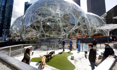 Dogs in the canine play areas at Amazon's headquarters in Seattle.