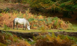 A horses grazes during the autumn in the New Forest in Hampshire