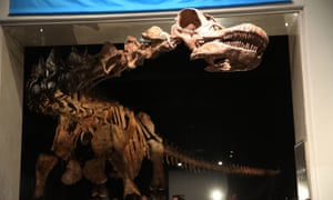 The Titanosaur replica at the American Museum of Natural History in New York.
