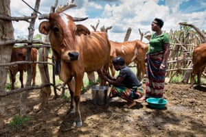Anick Lubinda (R) and Hilda Ndoka (l) with their cattle in their home village of Mukwalantila in Zambia