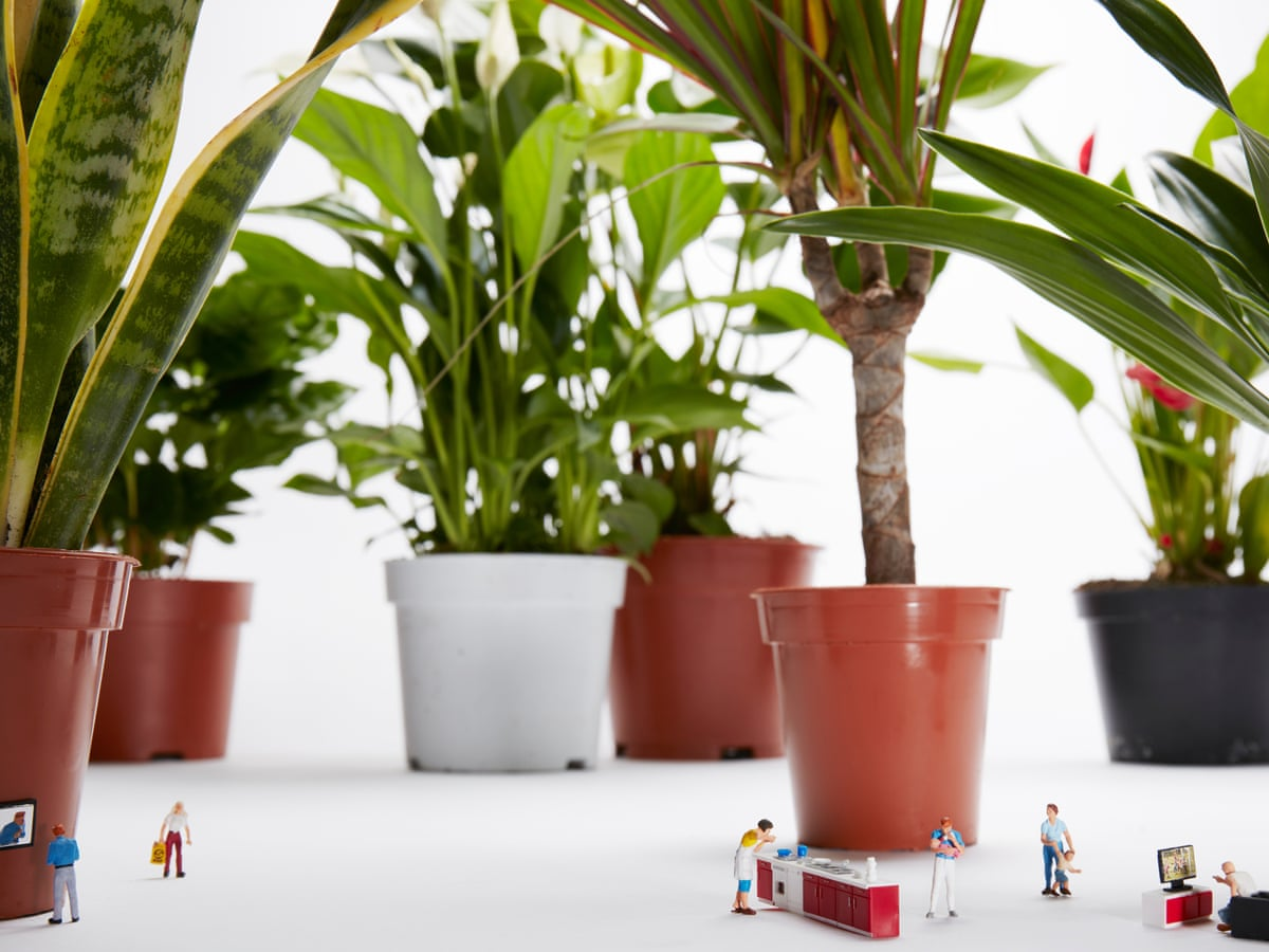 House Plants The New Bloom Economy Plants The Guardian