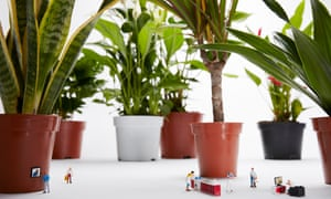 Flower pot men: 'In a clever early move, Freddie Blackett decided to baptise his products with human names – Chaz, the Swiss cheese plant; Fidel, the fiddle-leaf fig.'