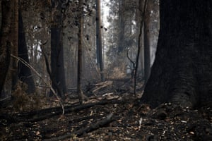 Smoking forests present a grim sight