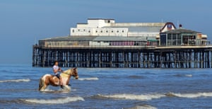 Blackpool Hercules the horse cools down in the sea