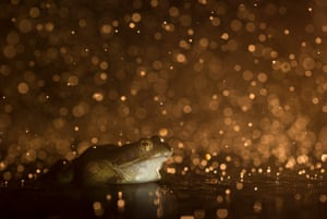 12–18 years category: Kyle Moore (age 16), Bokeh frog, Lowestoft, Suffolk, England