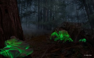 Ghost Mushrooms by Callie CheeBotanical winner: Nicknamed 'ghost mushrooms' dueto their eerie glow, this fungi is only found in certain forests in Australia. They glow for only a few weeks in a year and are therefore quite hard to find and photograph.