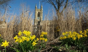 Daffodils in front of St Mary's church in south-west London