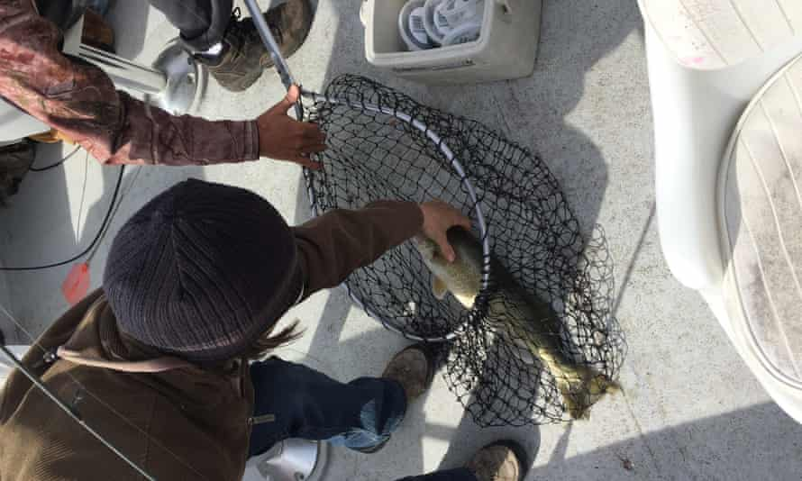 fish northwest angle