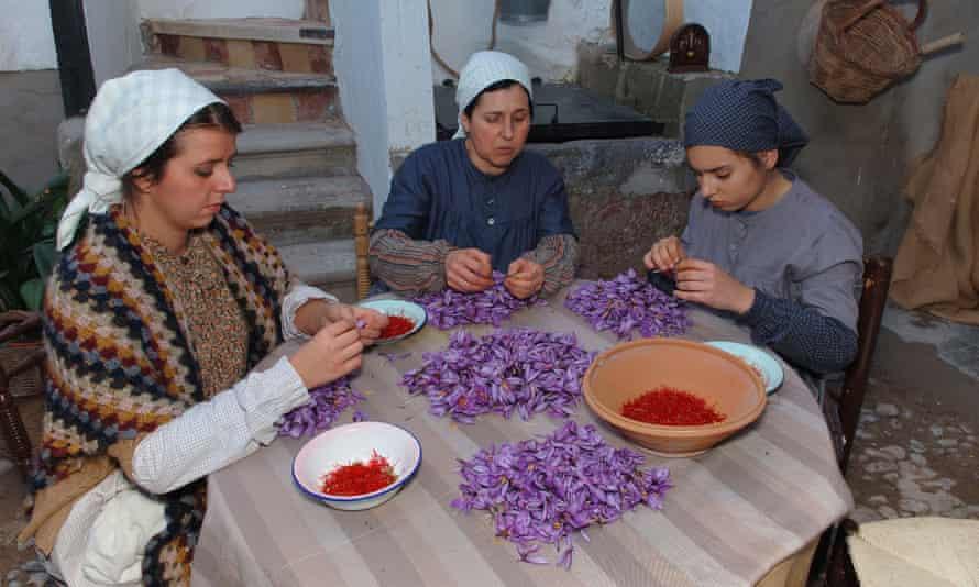 Crocus competition, Fiesta de la Rosa del Azafran,