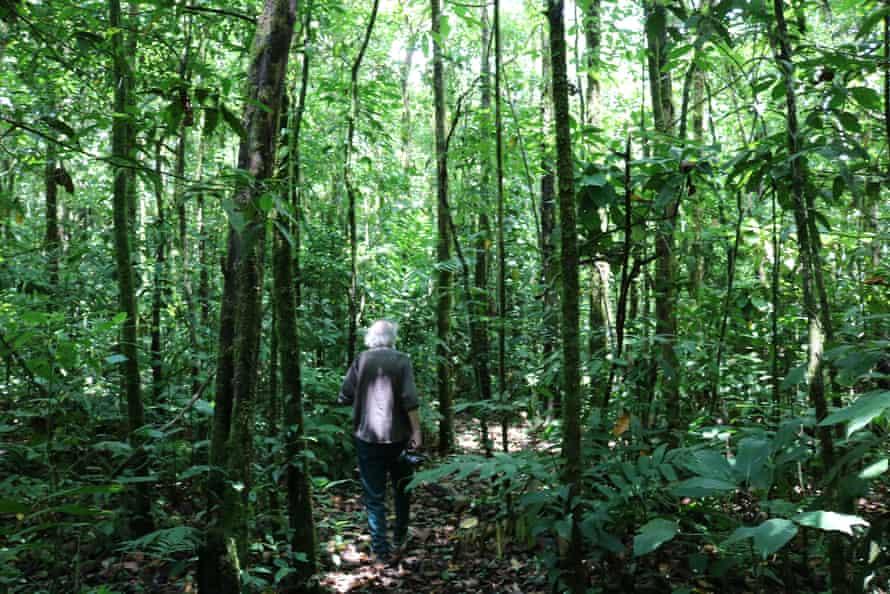 Daniel Janzen in regenerating rainforest in the ACG.