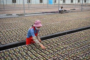 Gaoyou City, China Employees arrange succulents at an agricultural company in Xiejia Town