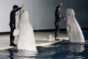 Little White and Little Grey perform during a show at Ocean World, Shanghai.