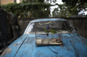 Parrots in a cage on the bonnet of an abandoned car at a squatter camp in Caracas, Venezuela