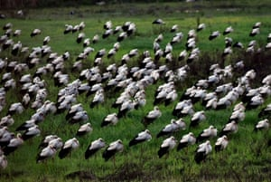 Storks rest on their seasonal migration near Karadut, in the Akdeniz area of Mersin, southern Turkey.