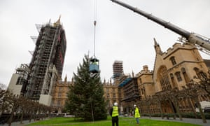 A huge Christmas tree being lifted vertically b y a crane in the grounds of Westminster, with two figures in hi-visibility jackets looking on