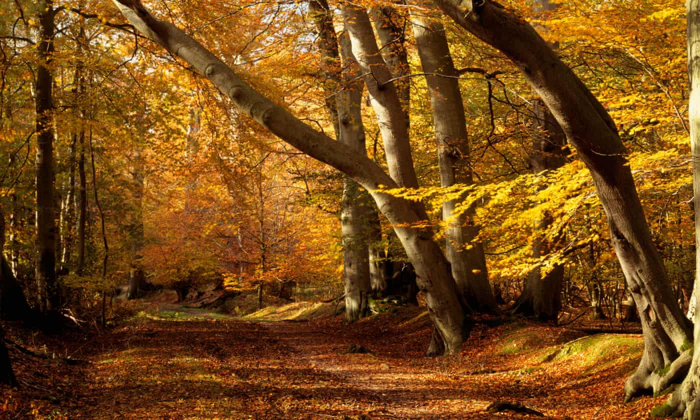 Woodland sounds help relaxation more than meditation apps - study
