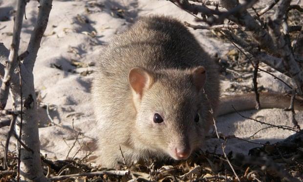 of animals essay extinction of animals essay