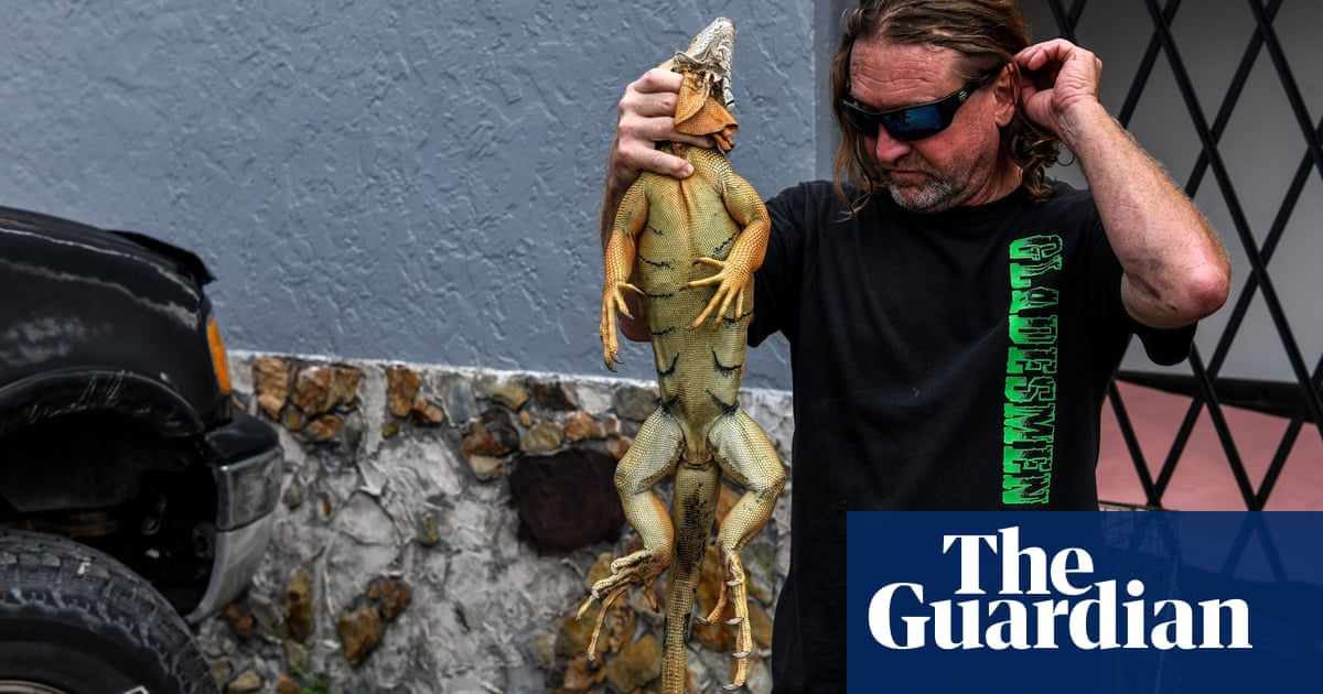 Toilet-invading iguanas among invasive species now banned in Florida