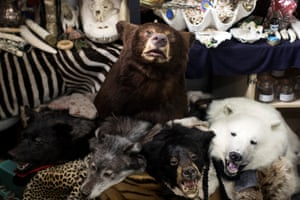 Taxidermy of endangered species seized by UK Border Force officers at Heathrow Airport and held at Custom House near Heathrow in London