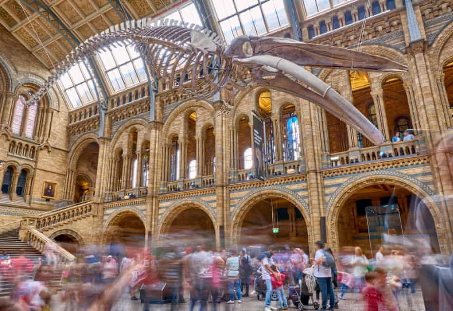 Hintze Hall at Natural History Museum, London.