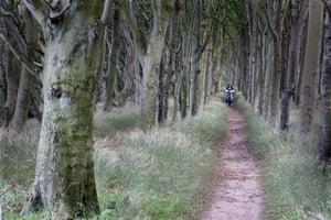 A boulevard of old beech trees near Kap Arkona.