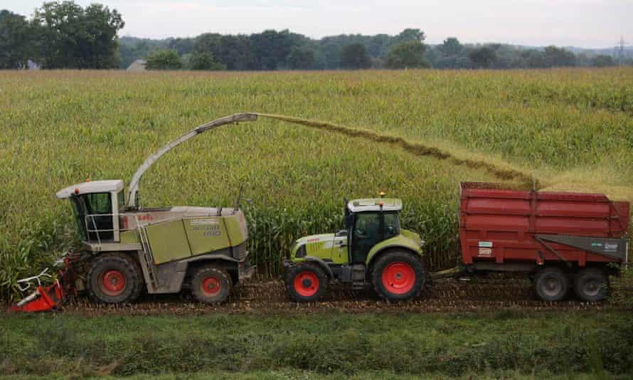 Farm machines harvest maize in a corn field in France.