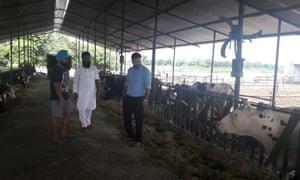 India dairy farmer
