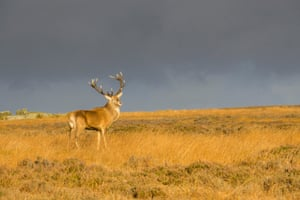 Big Moor. On Big Moor, from late September until November, red deer stags rut for the attention of the hinds