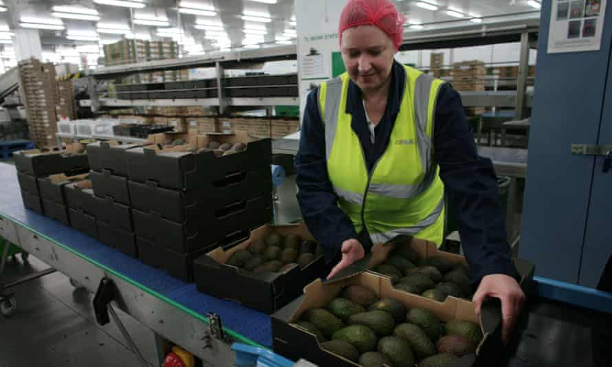 Avocados for Marks & Spencer are labelled using a laser.