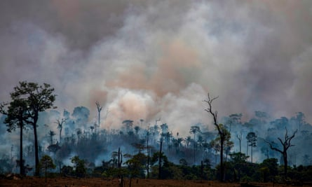 Burning Issue How Fashion S Love Of Leather Is Fuelling The Fires In The Amazon Fashion The Guardian