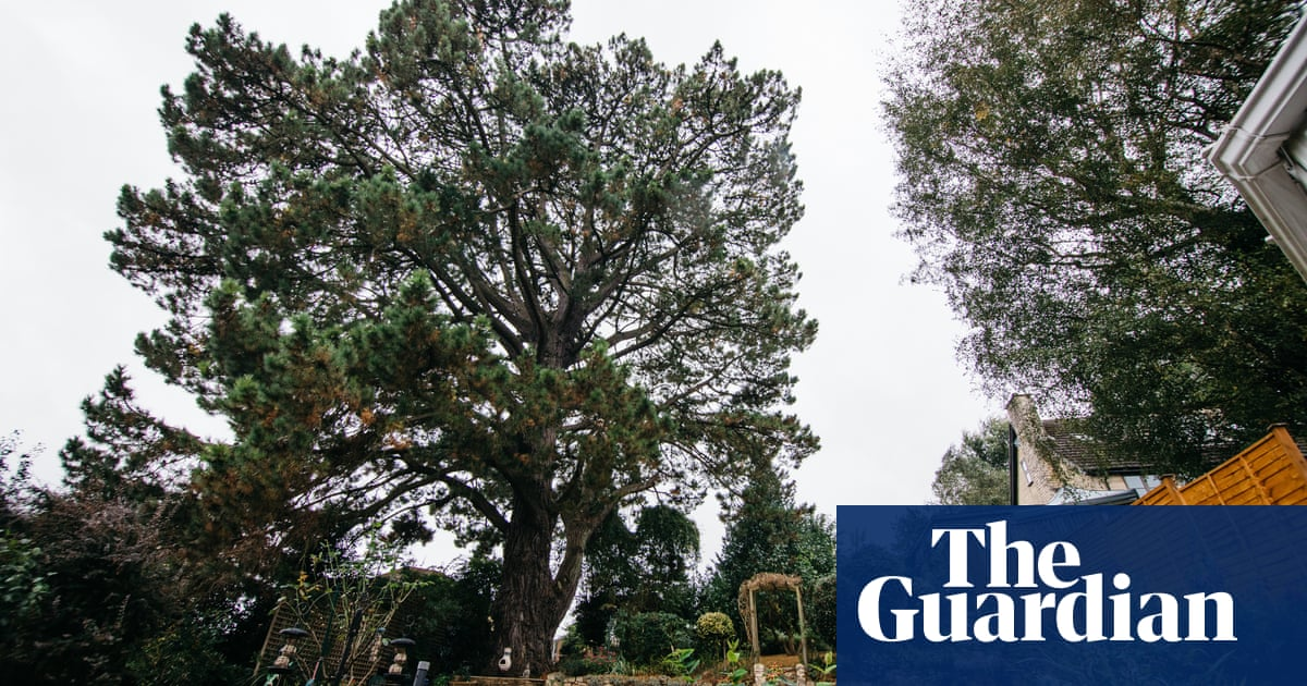Legacy of a lost pine: the suffragettes' tree inspiring a new generation