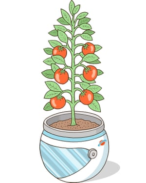 Outside the box thinking: the tomatoes of tomorrow.