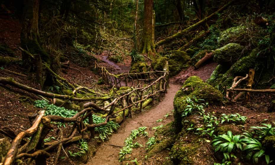 Puzzlewood, in the forest of Dean