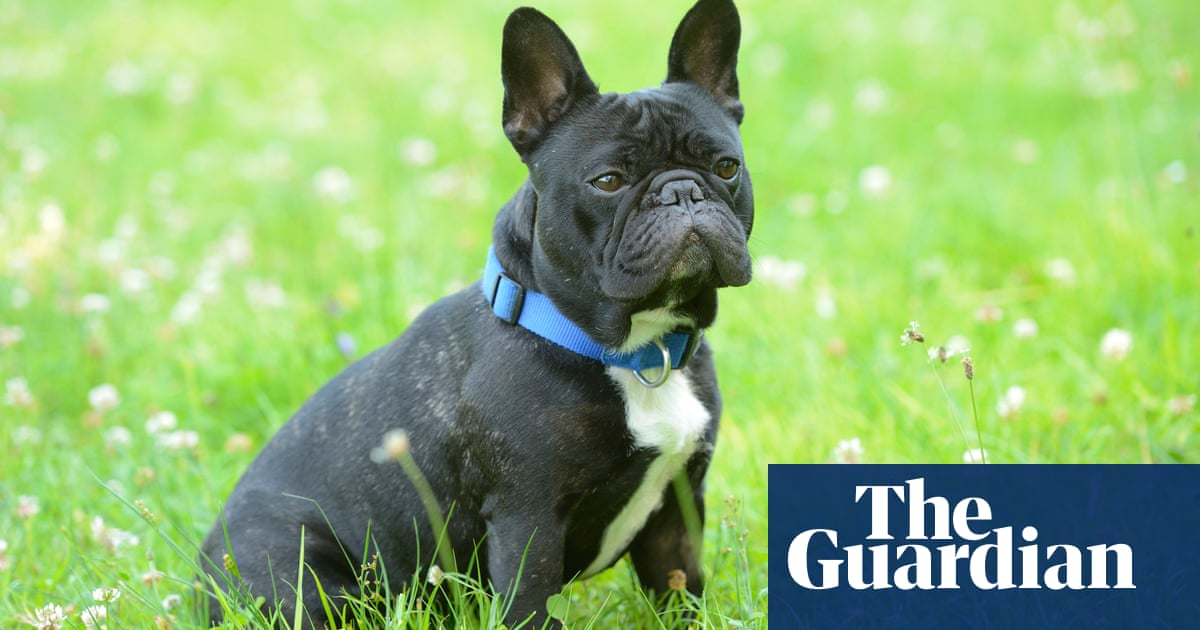 Would-be dog owners told to think twice before buying flat-faced breeds
