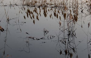 Reeds and their shadows form fish-shaped patterns in a pond at Qingkou saltern in Lianyungang, east China's Jiangsu province.