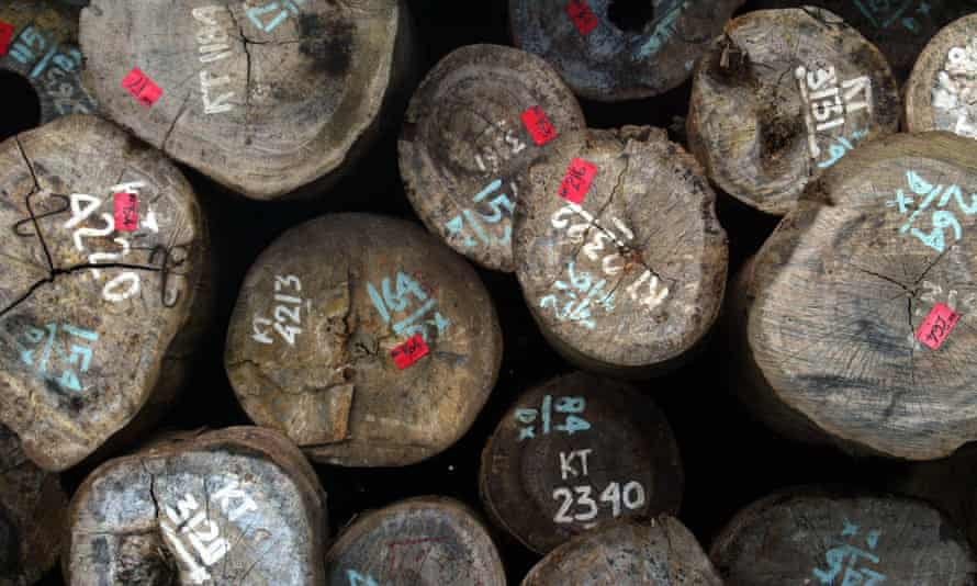 Stamped logs of raw timber in Indonesia