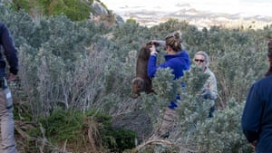 PhD student Shannon Taylor and Dr Rachael Gray with a young sea lion.