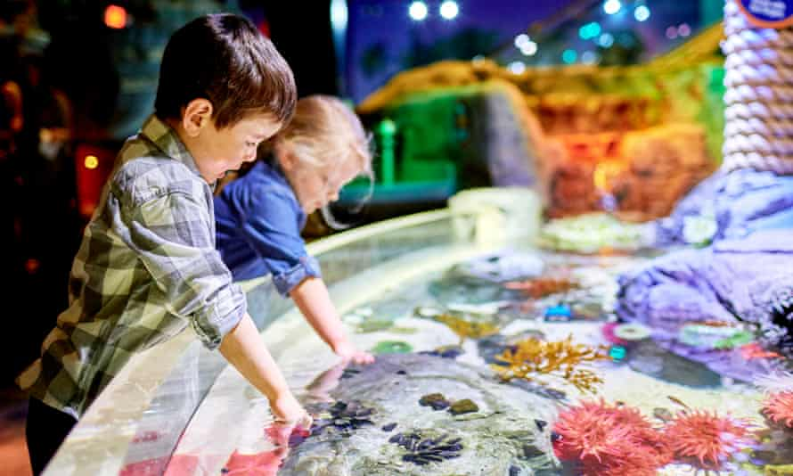 Children play in the touch seapool at the aquarium at the Mall of America, Minnesota