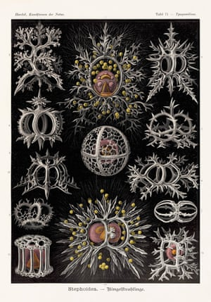 Radiolarians Art Forms in Nature, 1899–1904, plate 71