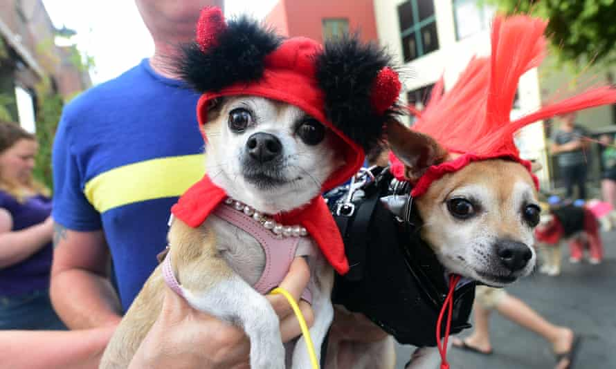 Pet dogs in costume